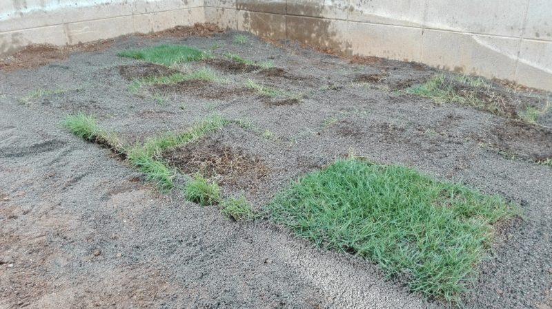 とりあえずよくわからないまま芝を置く