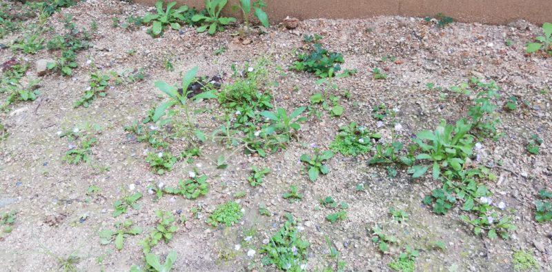 庭が雑草まみれ