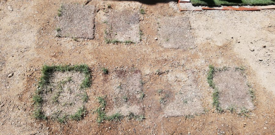 傷んだ芝生を移動