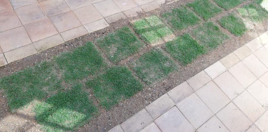 レンガの間に芝生を敷きました