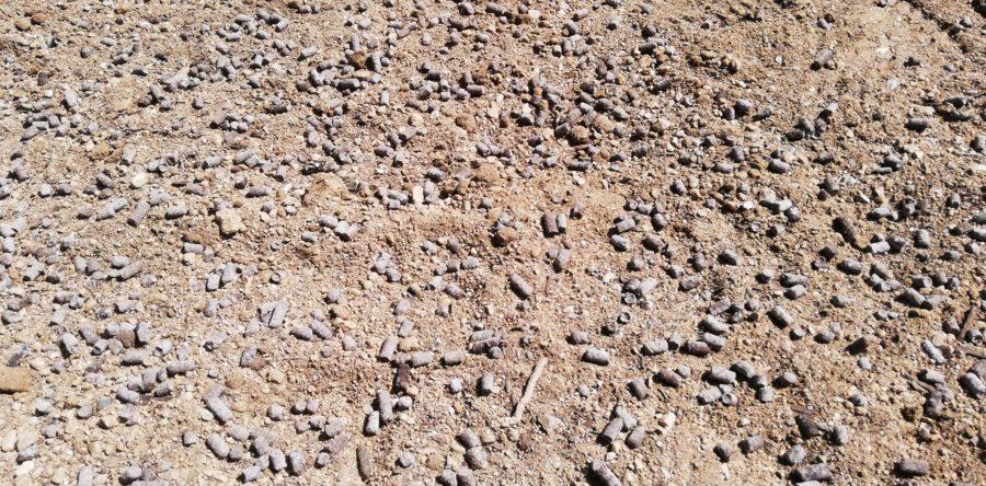 庭の真ん中の土に肥料をバラ撒く