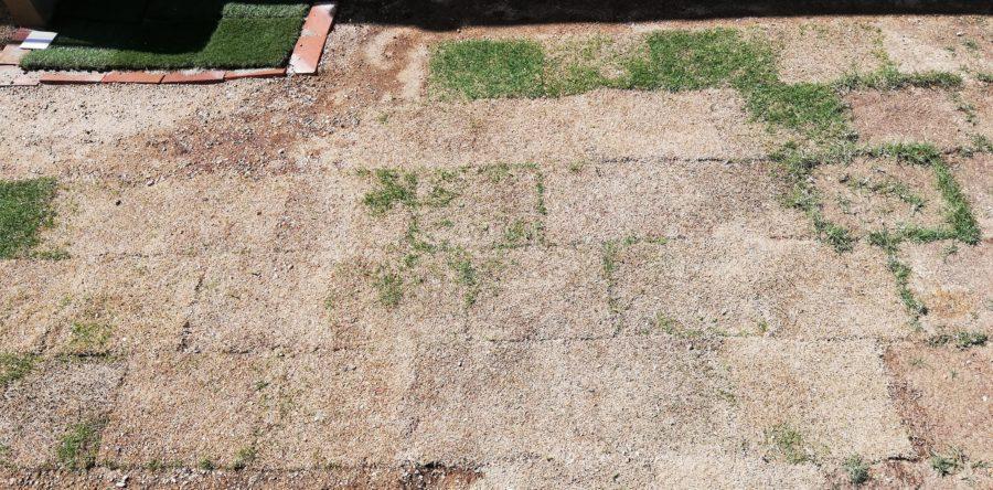 昨年秋に敷いた芝生たちを庭の真ん中に引っ越し