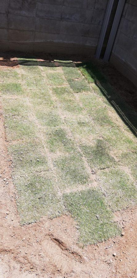 庭の角っこの土に芝生をさらに敷いていく