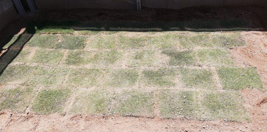 庭の角っこへの芝生貼りが完了!
