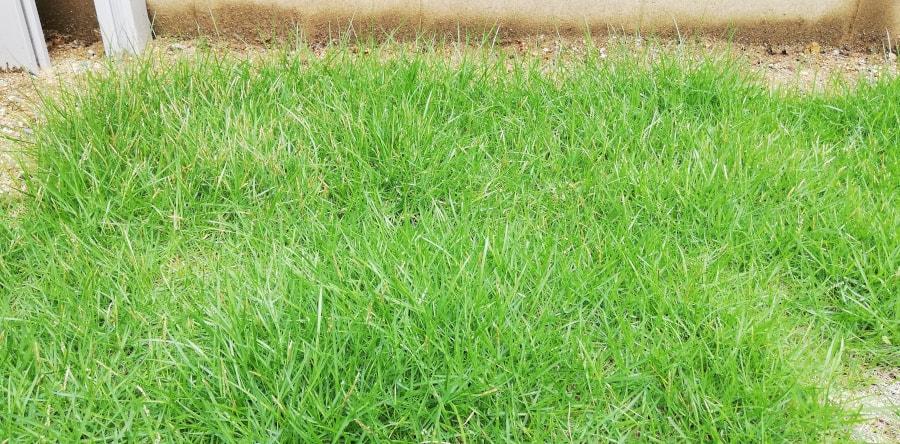 特別ボーボーな芝生部分