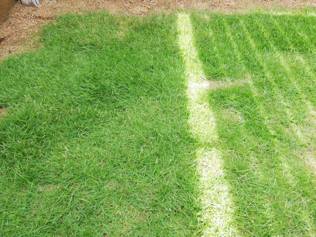 芝生は全体的に短くなりました(キレイではないですが)